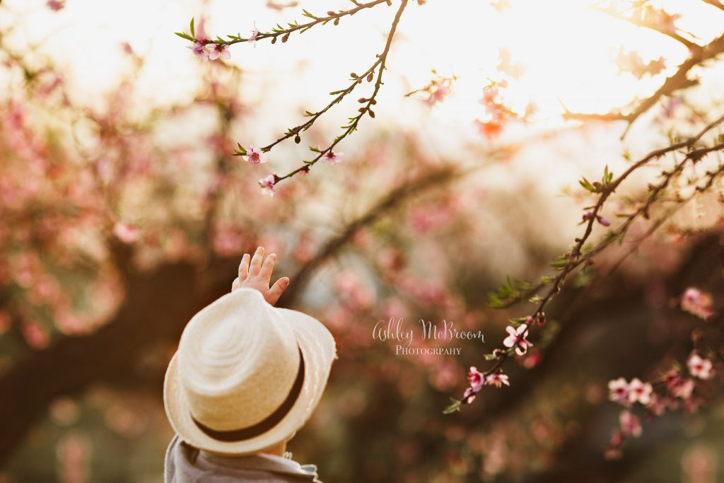 peach blossom minis young boy reaching