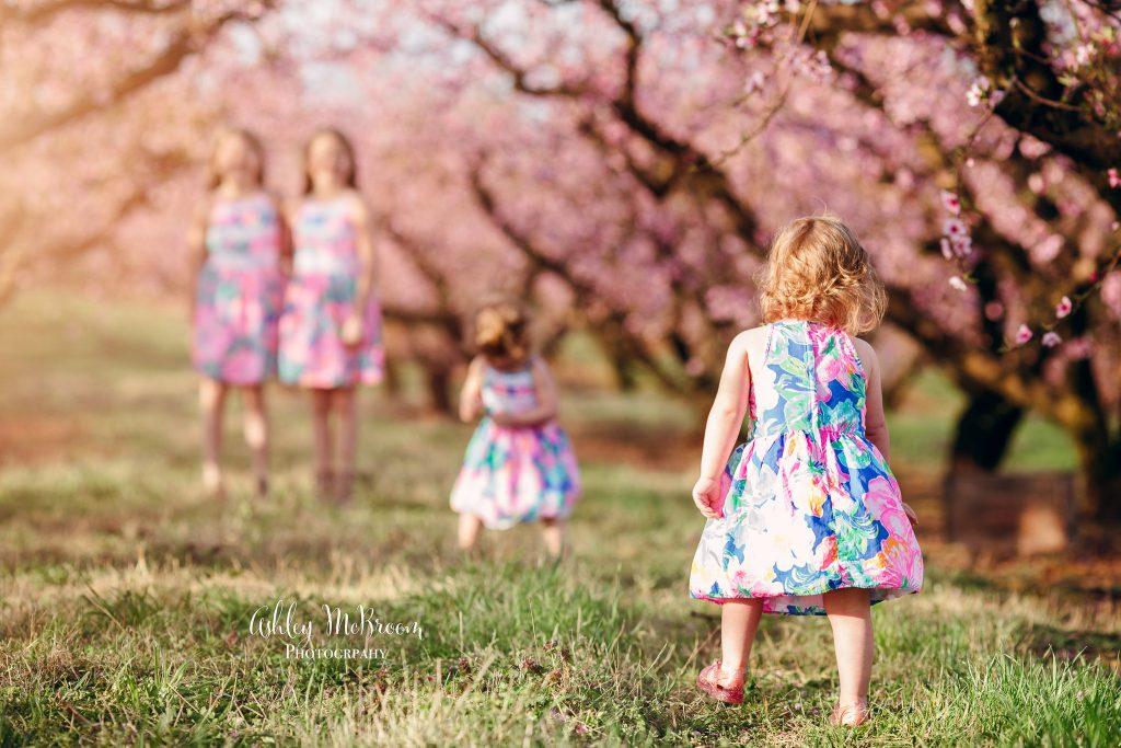 peach blossom minis