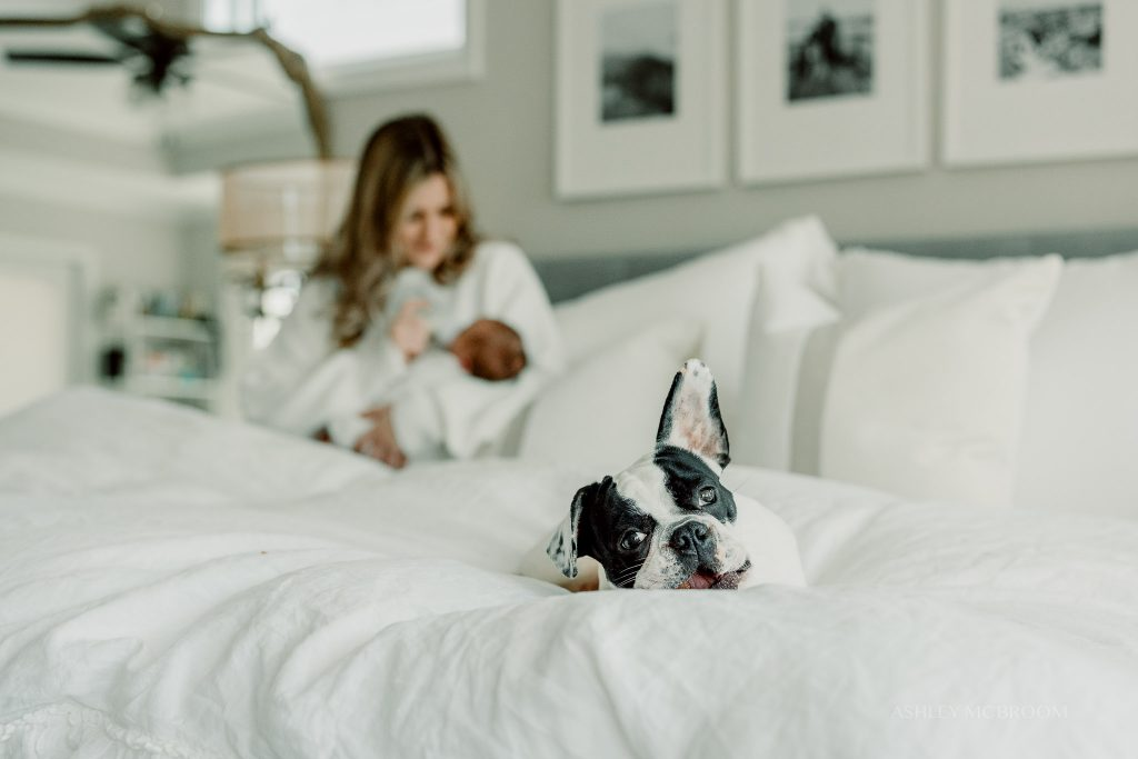 dog on bed during newborn photoshoot in home park