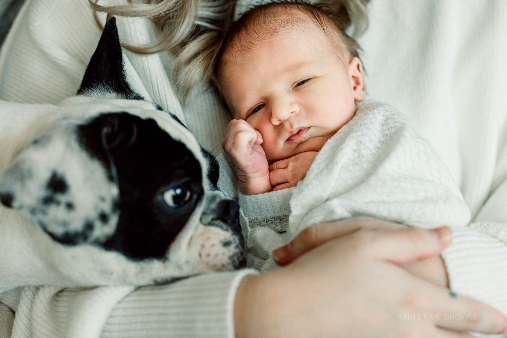 close up of newborn and dog in home park